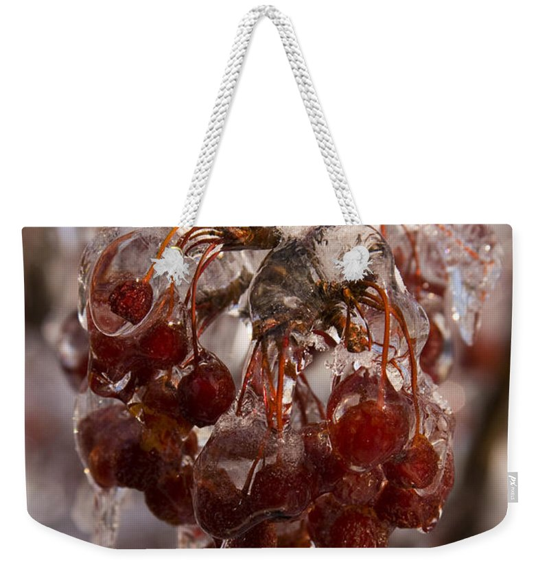 Berry Berries Red Frozen Ice Icy Snow White Spark Tree Winter Storm Glare Sun Reflection Weekender Tote Bag featuring the photograph Frozen Berries by Andrei Shliakhau