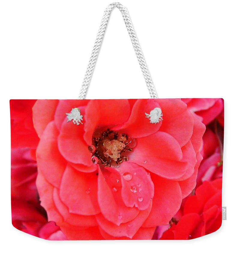 Roses Weekender Tote Bag featuring the photograph Full Bloom by Anthony Jones