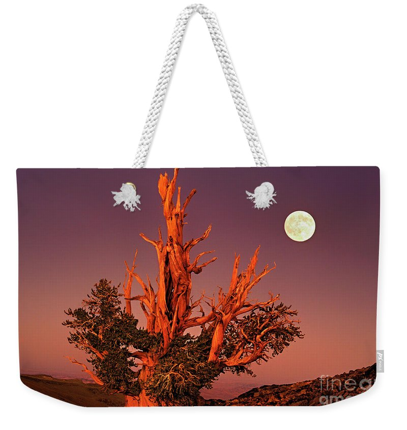 North America Weekender Tote Bag featuring the photograph Full Moon Behind Ancient Bristlecone Pine White Mountains California by Dave Welling