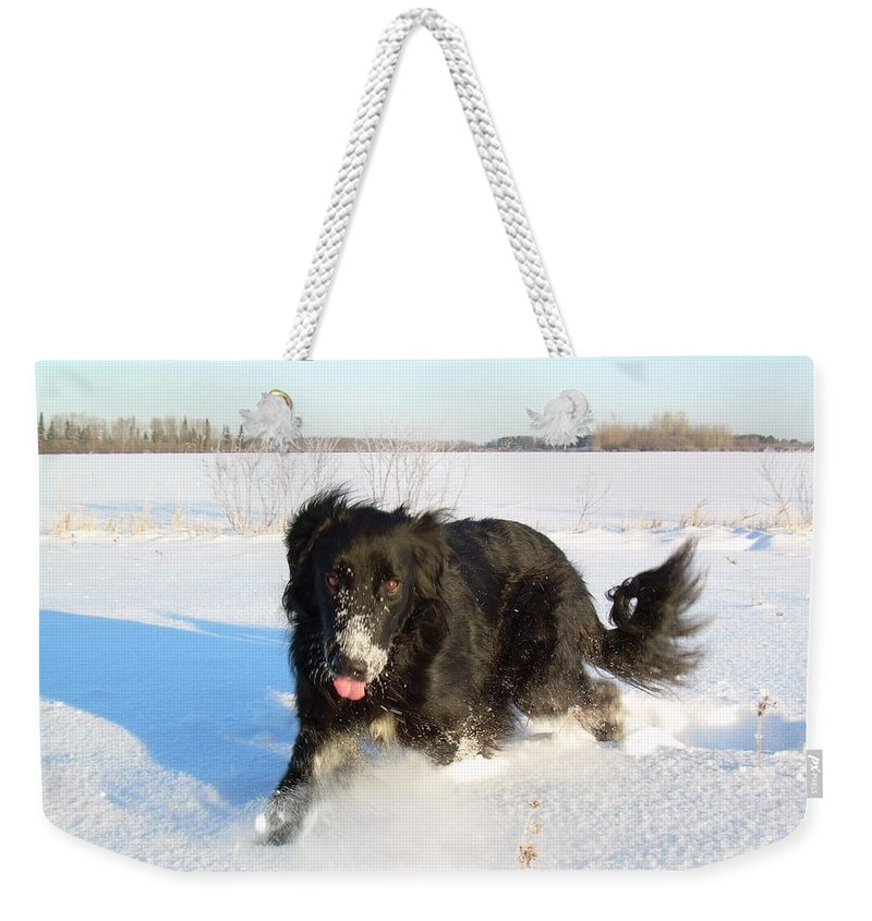 Dog Weekender Tote Bag featuring the photograph Fun In The Snow Running by Kent Lorentzen
