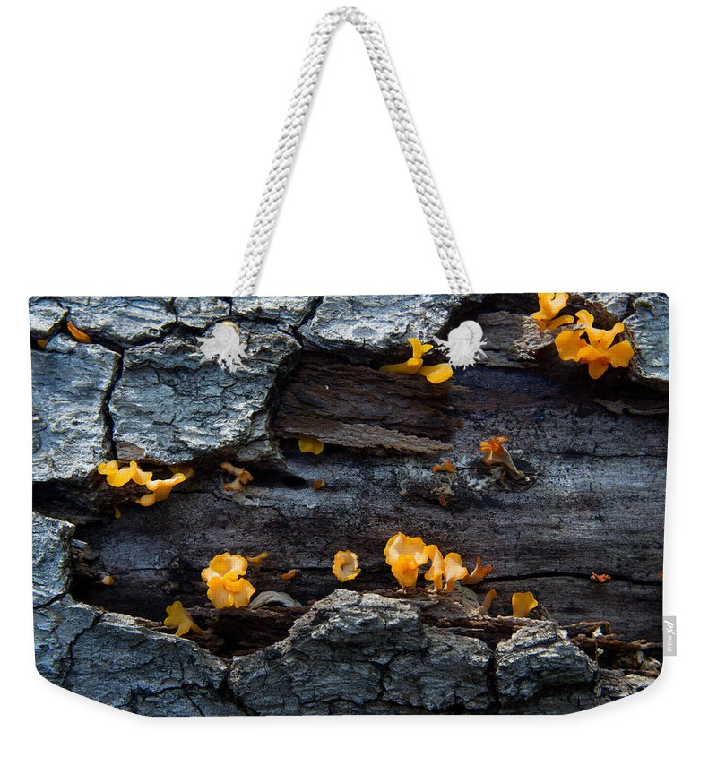 Cumberland Weekender Tote Bag featuring the photograph Fungi On Log by Douglas Barnett