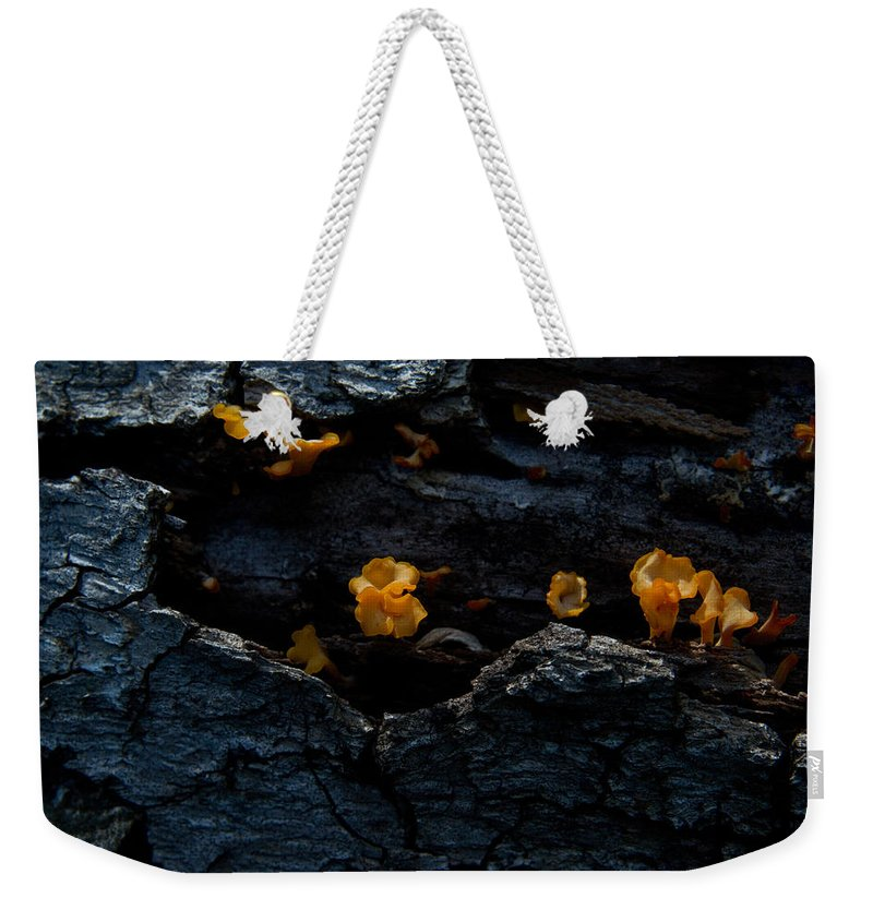 Weekender Tote Bag featuring the photograph Fungus On Log by Douglas Barnett