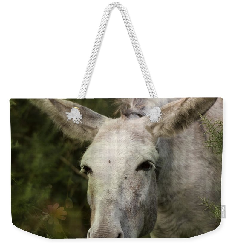 Donkey Weekender Tote Bag featuring the photograph Funky Donkey by Angel Ciesniarska