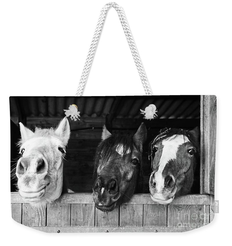 Horses Weekender Tote Bag featuring the photograph Funny Horses by Delphimages Photo Creations