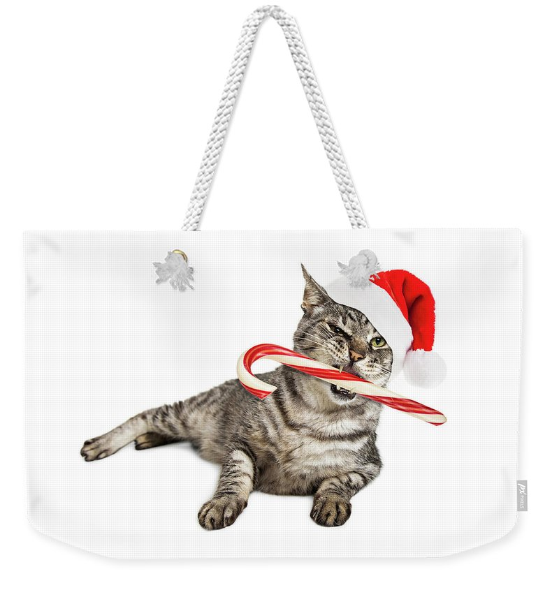 Animal Weekender Tote Bag featuring the photograph Funny Santa Cat With Candy Cane by Susan Schmitz