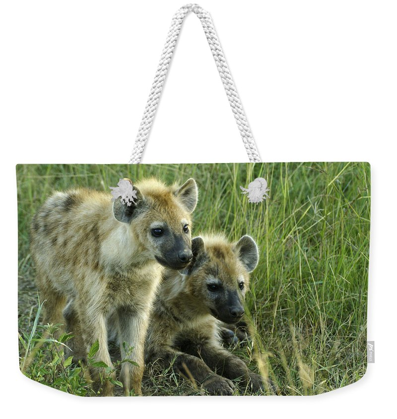 Africa Weekender Tote Bag featuring the photograph Fuzzy Baby Hyenas by Michele Burgess