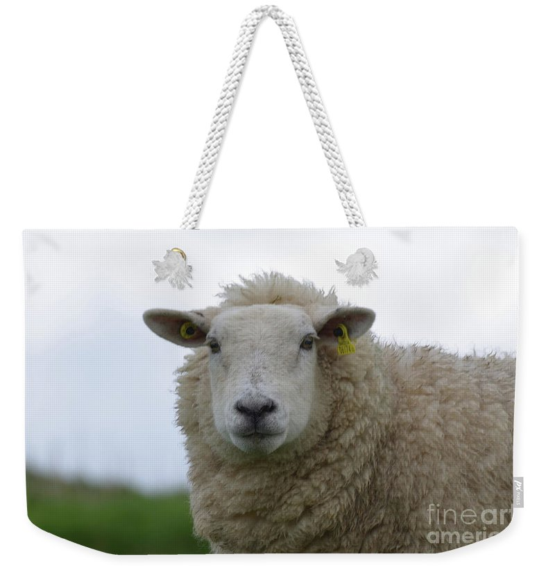 Sheep Weekender Tote Bag featuring the photograph Fuzzy White Sheep In A Remote Location by DejaVu Designs