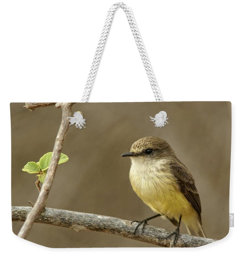 Birds Weekender Tote Bag featuring the photograph Galapagos Flycatcher - Isabela Island, Galapagos by Jim Bourne
