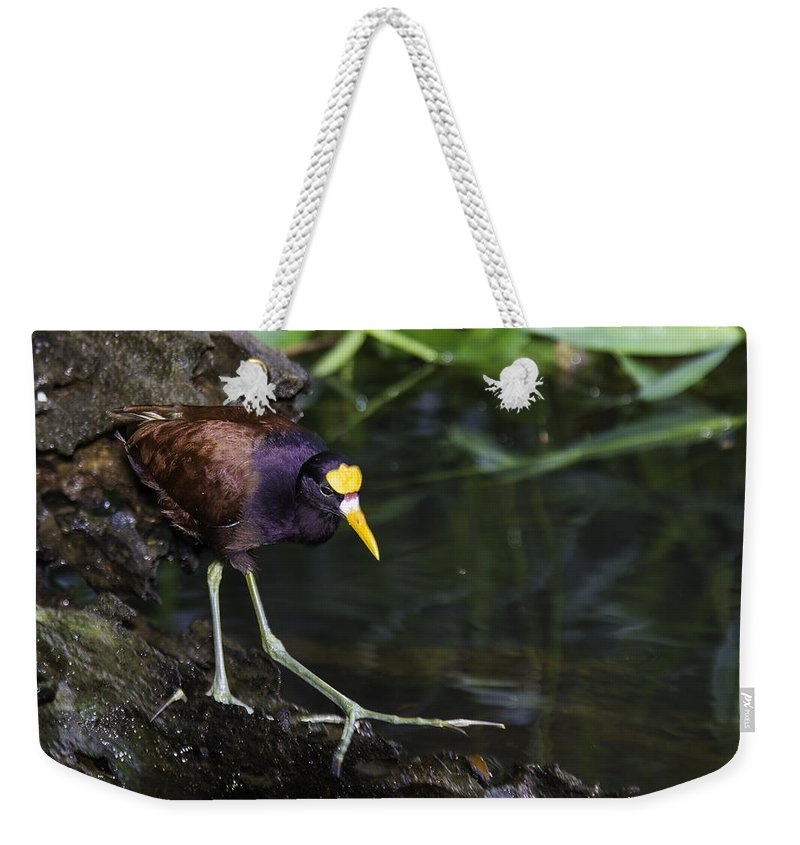 2013 Weekender Tote Bag featuring the photograph Gallinule by Marie Elise Mathieu