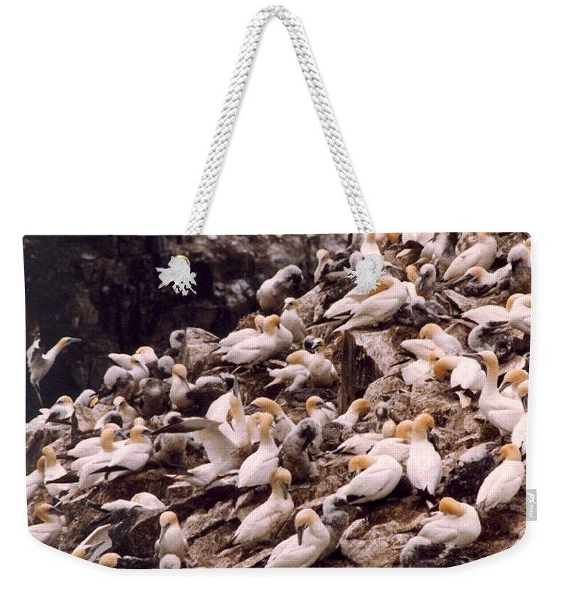 Gannet Weekender Tote Bag featuring the photograph Gannet Cliffs by Mary Mikawoz