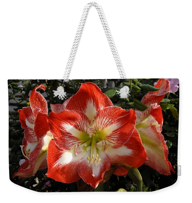 Garden Weekender Tote Bag featuring the photograph Garden Flowers by David Lee Thompson