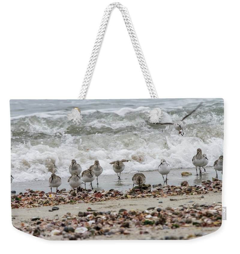 Wildlife Weekender Tote Bag featuring the photograph Gathering by Barbara Blanchard