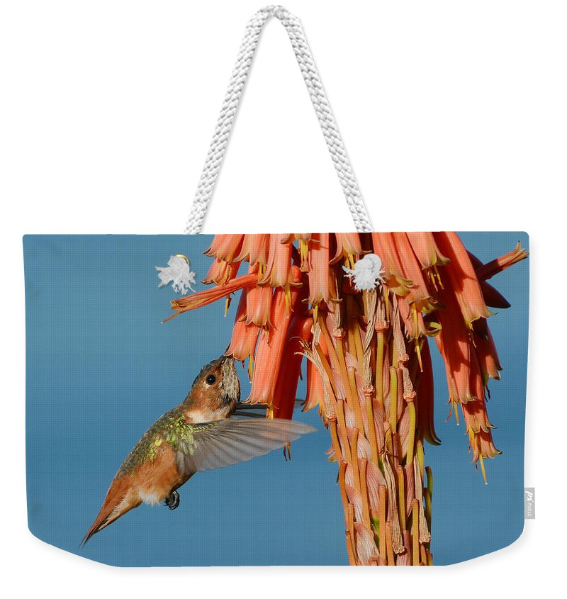 Allens Hummingbird Weekender Tote Bag featuring the photograph Gathering Nectar by Fraida Gutovich