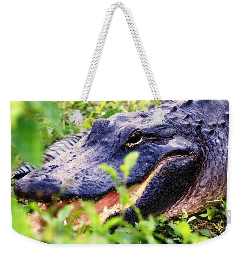 Aligator Weekender Tote Bag featuring the photograph Gator 1 by Marty Koch