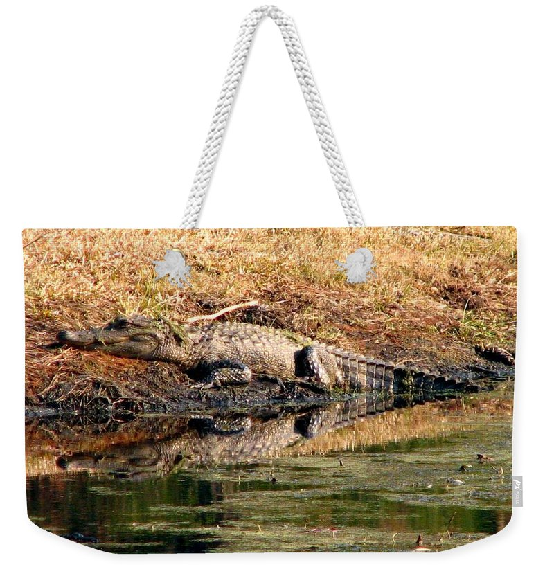 Gator Weekender Tote Bag featuring the photograph Gator 5 by J M Farris Photography