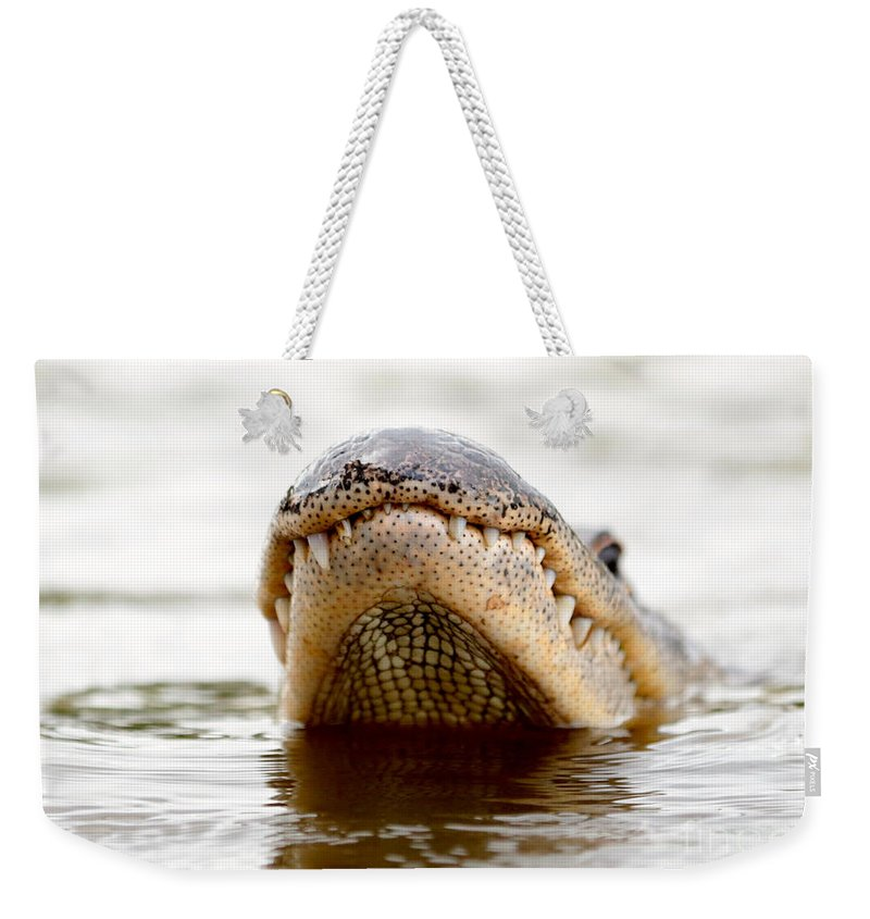 Gator Weekender Tote Bag featuring the photograph Gator Grin by Carol Groenen