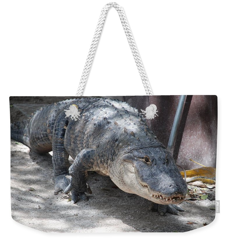 Alligator Weekender Tote Bag featuring the photograph Gator On The Move by Rob Hans