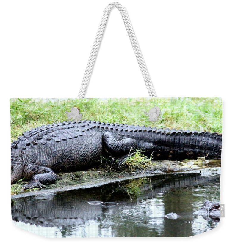 Alligator Weekender Tote Bag featuring the photograph Gator On The Shore by Faith Williams