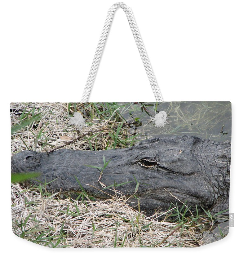 Alligator Weekender Tote Bag featuring the photograph Gator by Stacey May