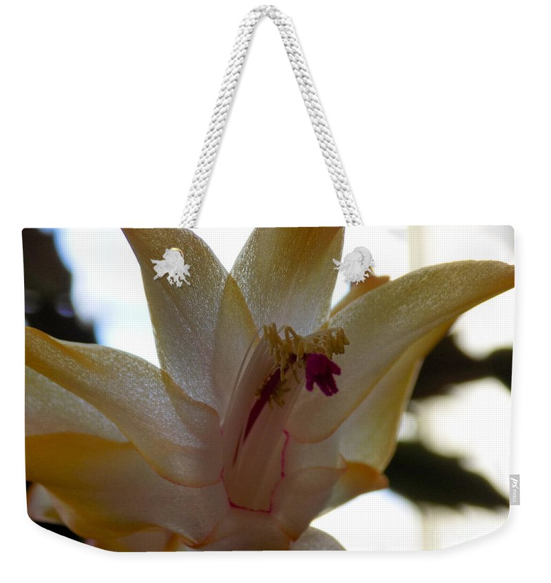 Succulents Weekender Tote Bag featuring the photograph Gauzy by William Tasker