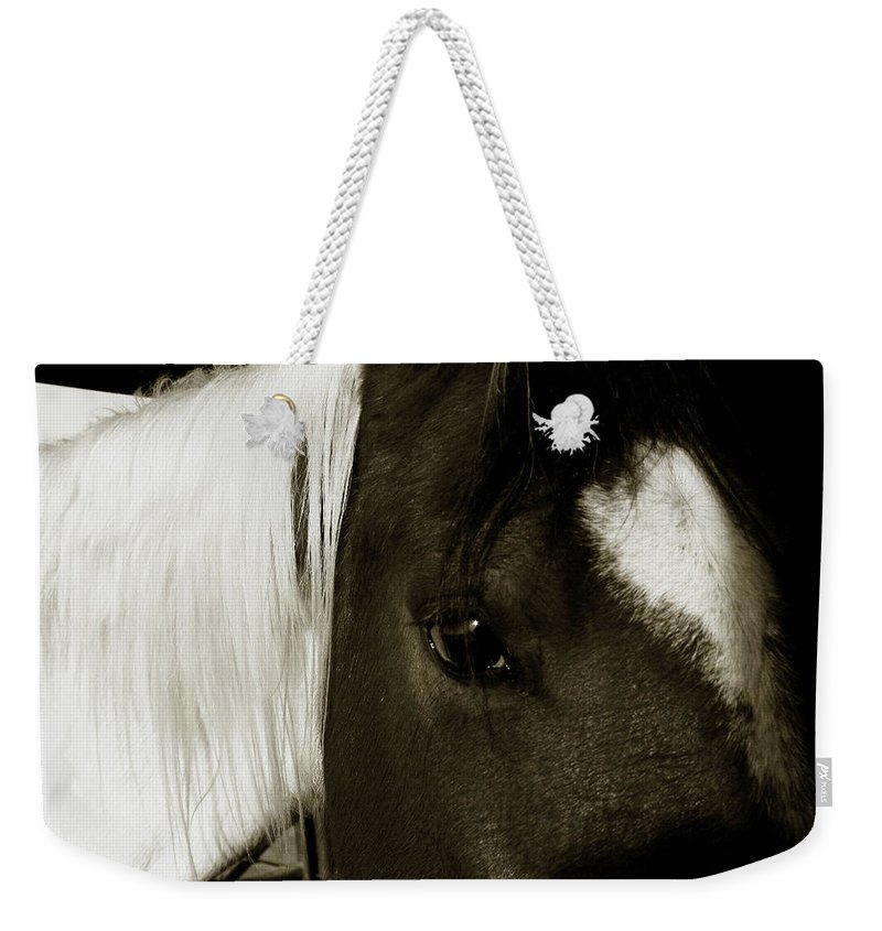 Horse Weekender Tote Bag featuring the photograph Gaze by Toni Hopper