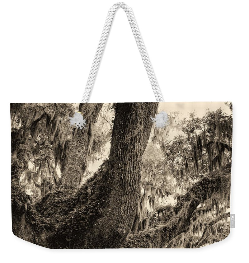 Live Oak Weekender Tote Bag featuring the photograph Georgia Live Oaks And Spanish Moss In Sepia by Kathy Clark