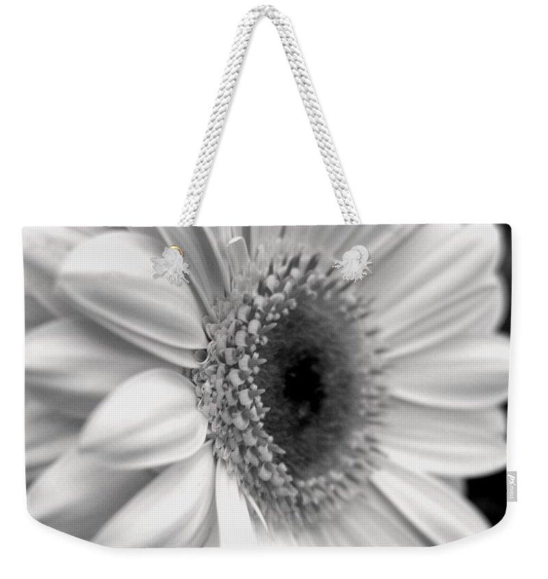 Flora Weekender Tote Bag featuring the photograph Gerbera Daisy by Natasha Sweetapple