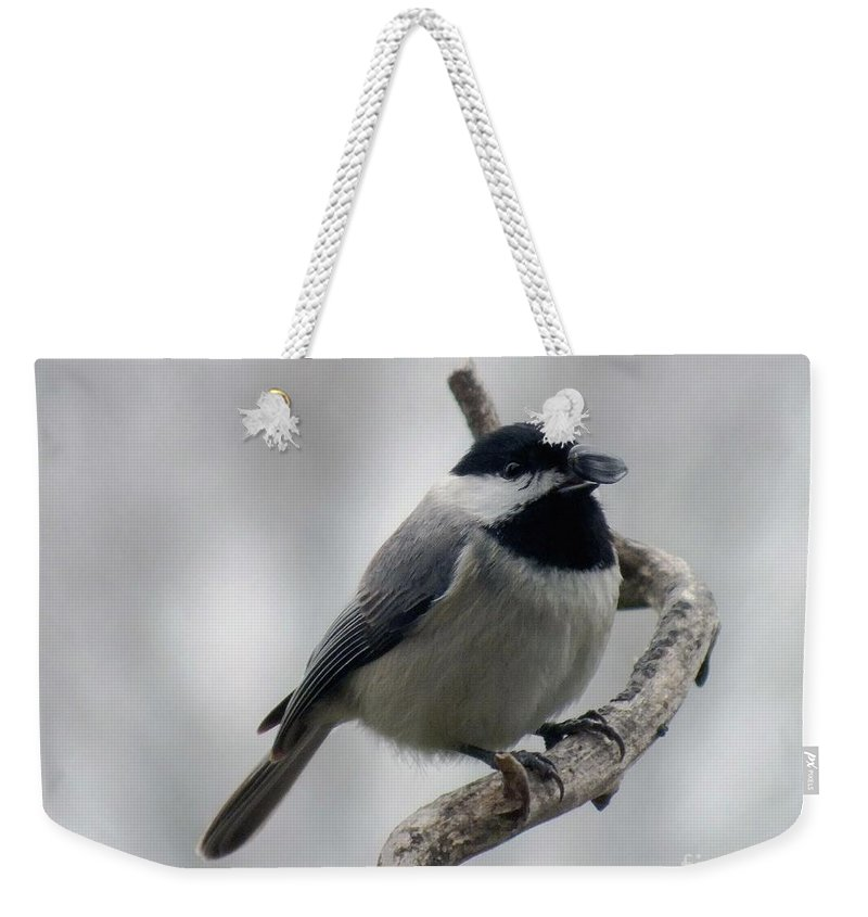 Black-capped Chickadee Weekender Tote Bag featuring the photograph Getting Ready To Crack - Black-capped Chickadee by Cindy Treger