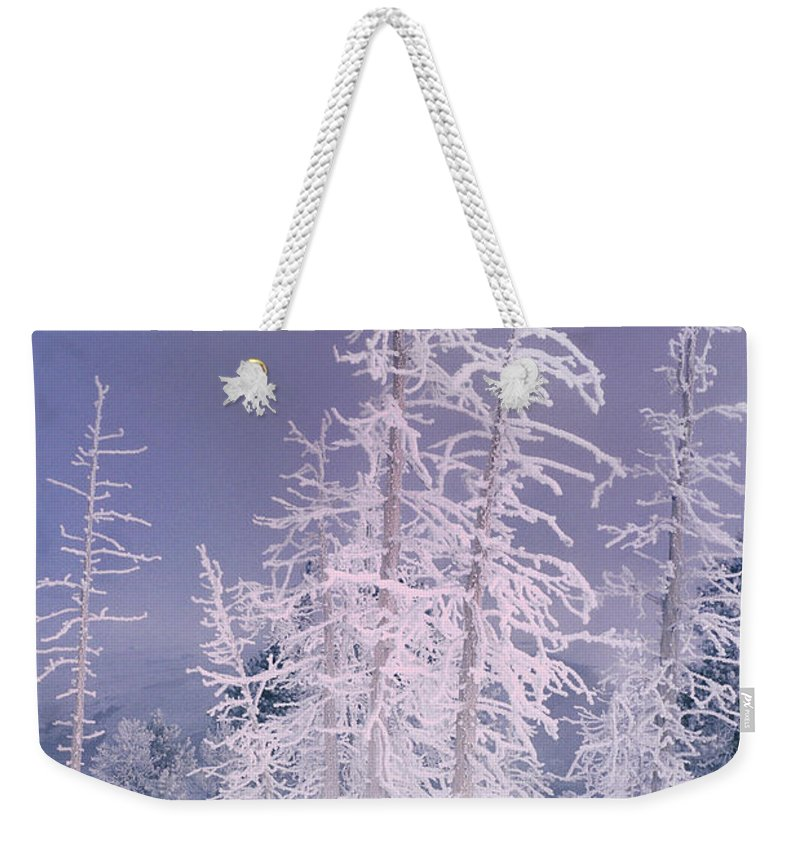 North America Weekender Tote Bag featuring the photograph Ghost Trees Yellowstone National Park by Dave Welling