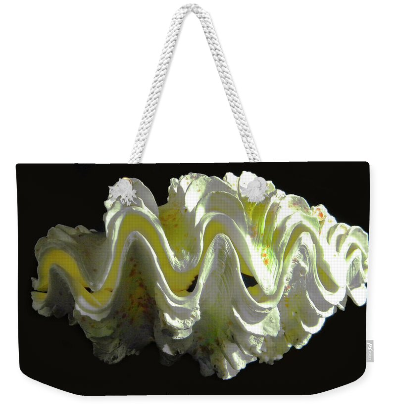 Frank Wilson Weekender Tote Bag featuring the photograph Giant Frilled Clam Seashell Tridacna Squamosa by Frank Wilson
