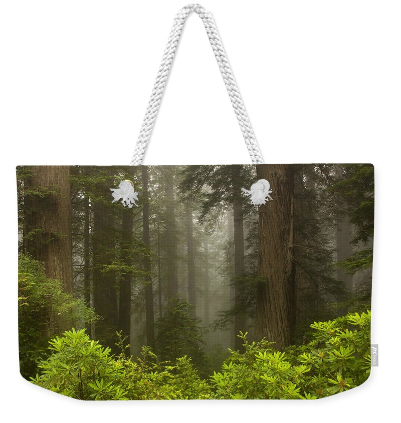 Redwood Weekender Tote Bag featuring the photograph Giants In The Mist by Mike Dawson