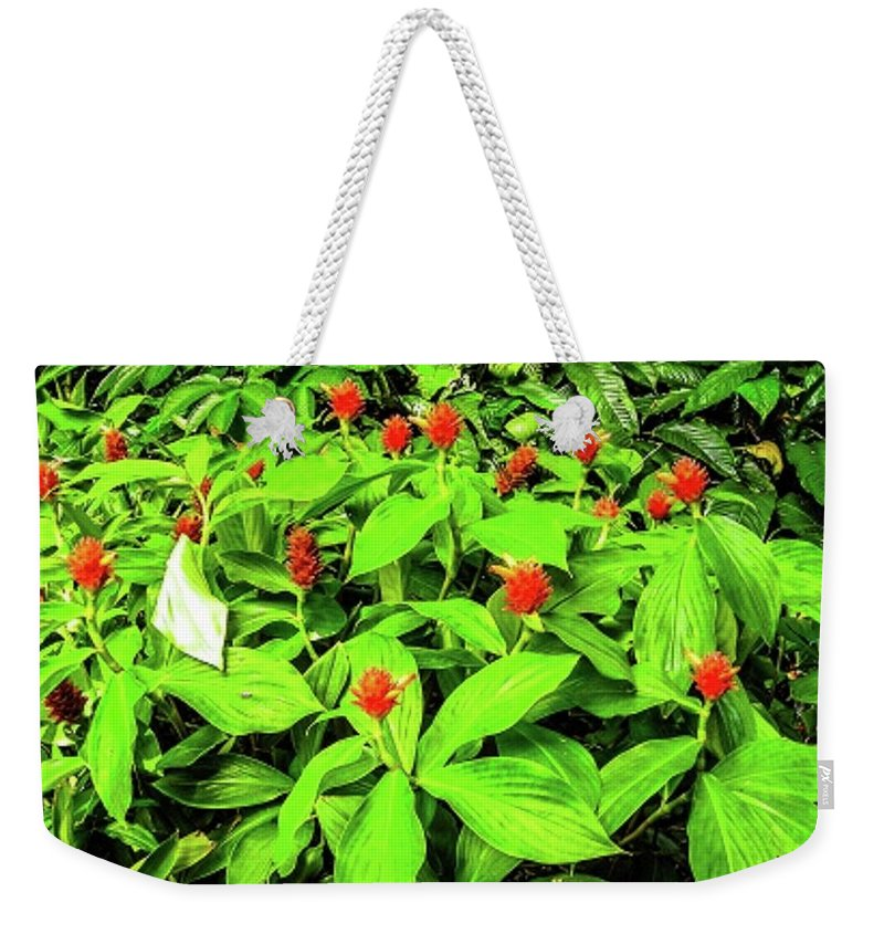 Flowers Weekender Tote Bag featuring the photograph Ginger Flowers by Louie Navoni
