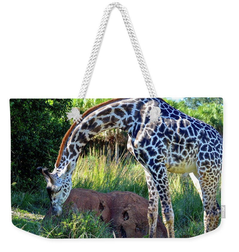 Photography Weekender Tote Bag featuring the photograph Giraffe Feasting by Elizabeth Abbott