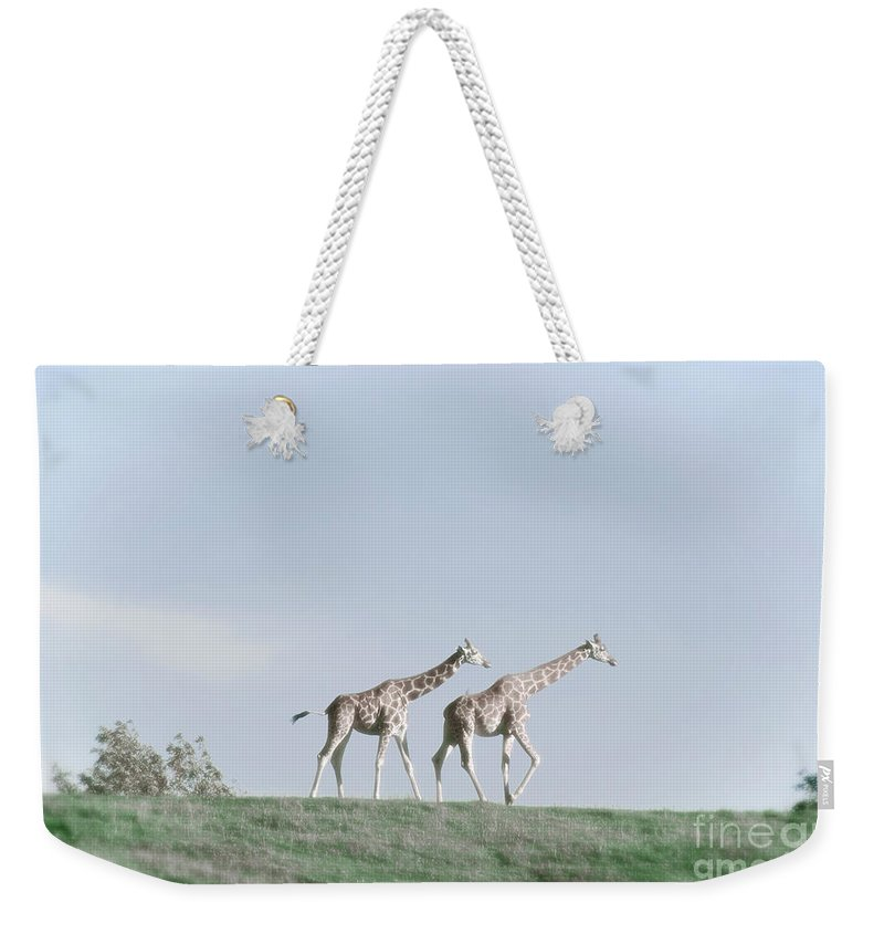 Giraffe Weekender Tote Bag featuring the photograph Giraffe Pair On Hill by Jim And Emily Bush