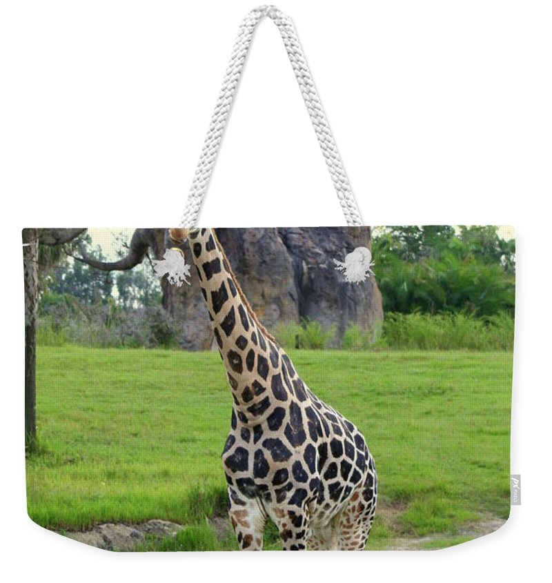 Giraffa Camelopardalis Weekender Tote Bag featuring the photograph Giraffe With African Baobob Tree by Anita Hiltz