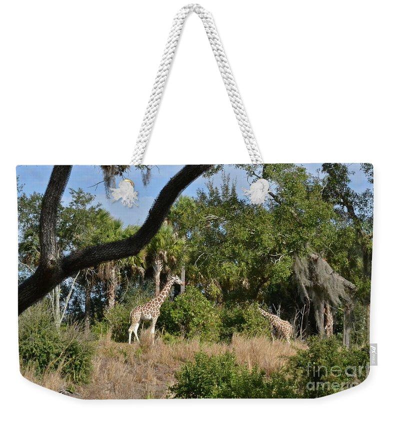 Giraffes Weekender Tote Bag featuring the photograph Giraffes by Carol Bradley