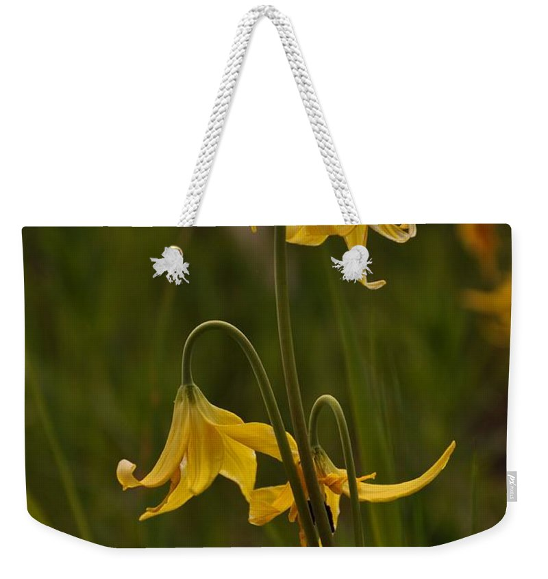 Yellowstone National Park Weekender Tote Bag featuring the photograph Glacier Lilly by Frank Madia