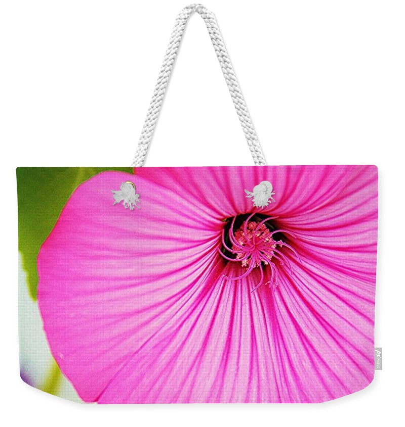Pink Morning Glory Weekender Tote Bag featuring the photograph Glorious In Pink by Lori Mahaffey
