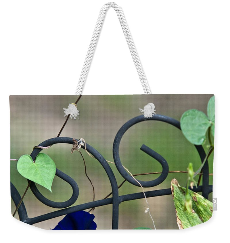 Morning Weekender Tote Bag featuring the photograph Glorious Morning Glory by Douglas Barnett