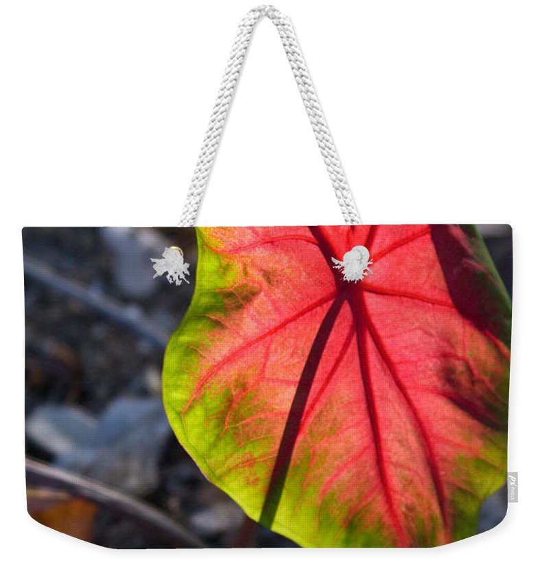 Glowing Weekender Tote Bag featuring the photograph Glowing Coladium Leaf by Douglas Barnett