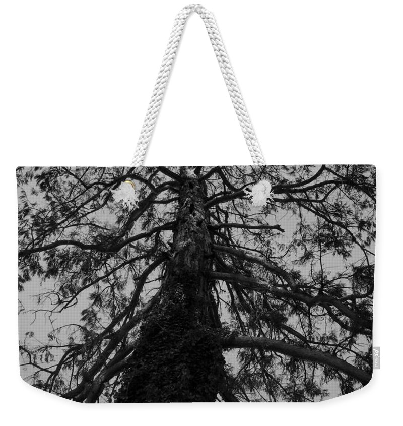 Nature Weekender Tote Bag featuring the photograph Gnarly Tree by Juergen Weiss