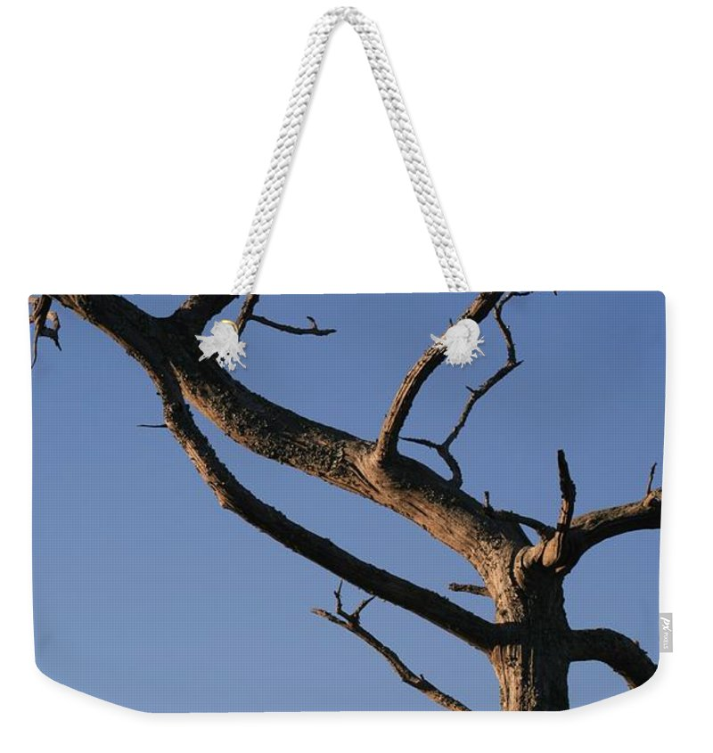 Tree Weekender Tote Bag featuring the photograph Gnarly Tree by Nadine Rippelmeyer