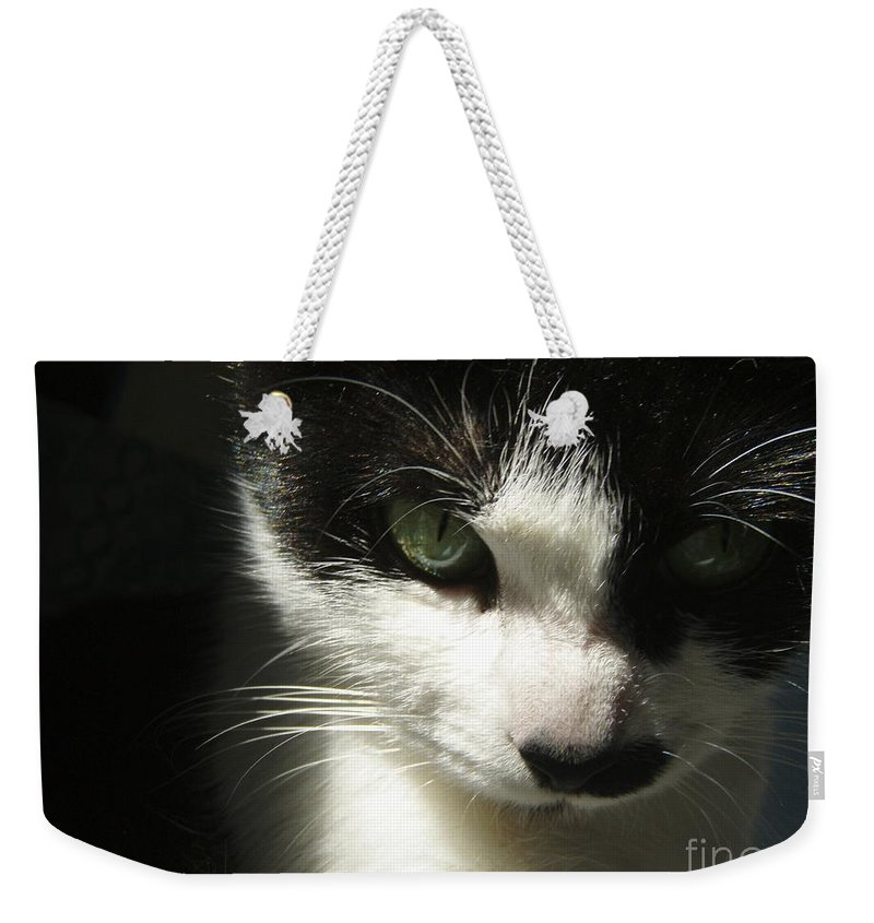 Cat Eyes Weekender Tote Bag featuring the photograph Go Ahead Make My Day by Kristine Nora