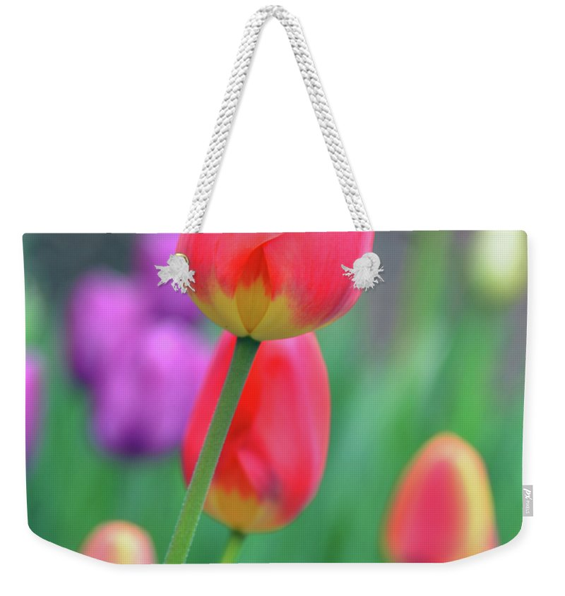 Tulip Weekender Tote Bag featuring the photograph Go Your Own Way by Angelina Vick