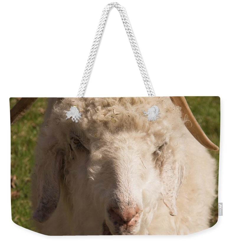 Goat Weekender Tote Bag featuring the photograph Goat Eating by Diane Schuler