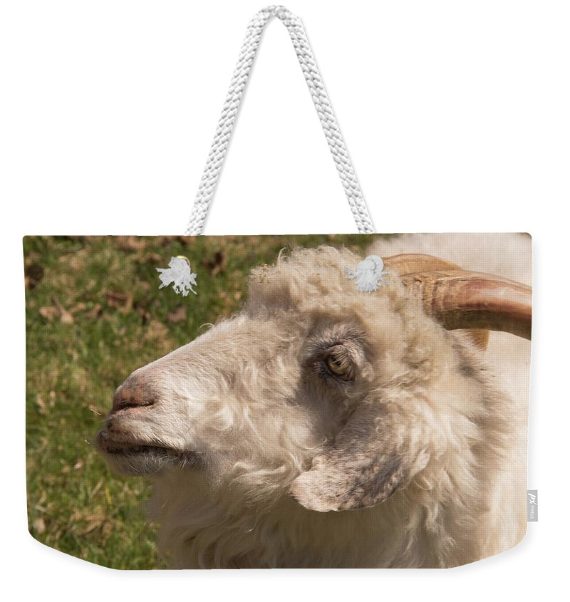 Goat Weekender Tote Bag featuring the photograph Goat Looking Up. by Diane Schuler