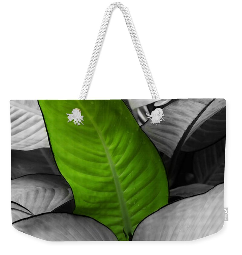 Leaf Weekender Tote Bag featuring the photograph Going Green - Dreamy by Marilyn Hunt