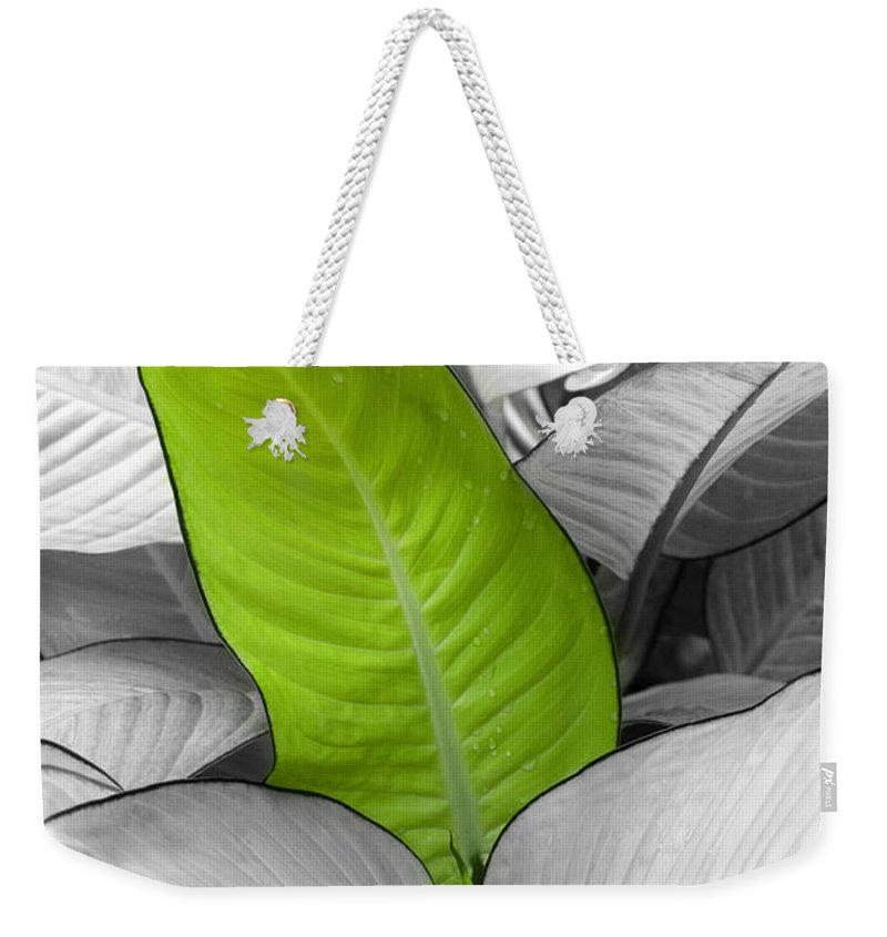 Leaf Weekender Tote Bag featuring the photograph Going Green Lighter by Marilyn Hunt