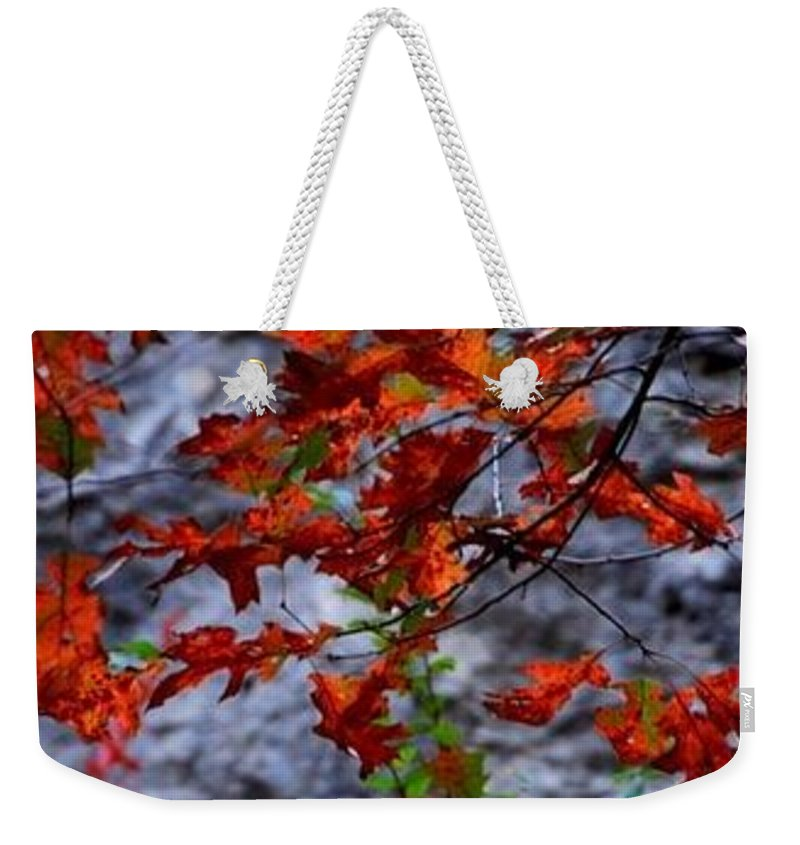 Red Leaves Weekender Tote Bag featuring the photograph Going Red by Ed Ostrander