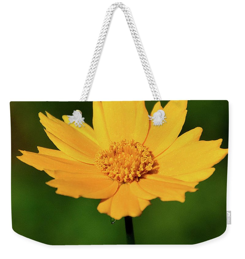Ann Keisling Weekender Tote Bag featuring the photograph Gold In The Garden by Ann Keisling